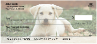 Yellow Lab Puppies Personal Checks | DOG-72