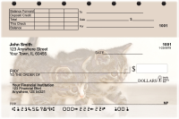 Cute Kittens Top Stub Personal Checks | TSANI-06R