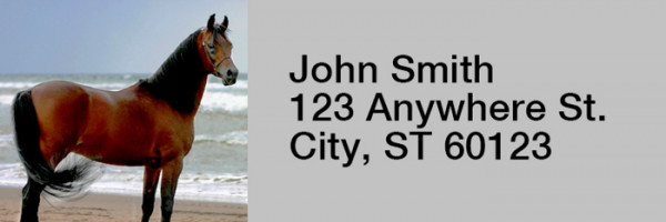 Horse Rectangle Address Labels | LRRANI-02