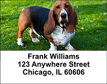 Basset Hound Address Labels