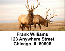 American Wildlife Address Labels